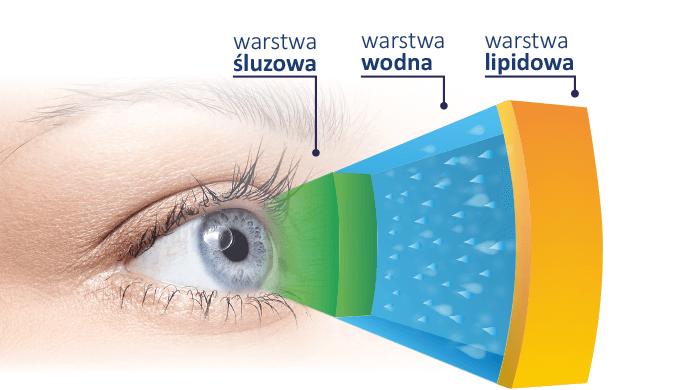 3 warstwy filmu łzowego